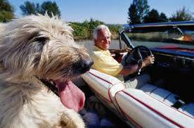 dog-with-smiling-man-in-convertible