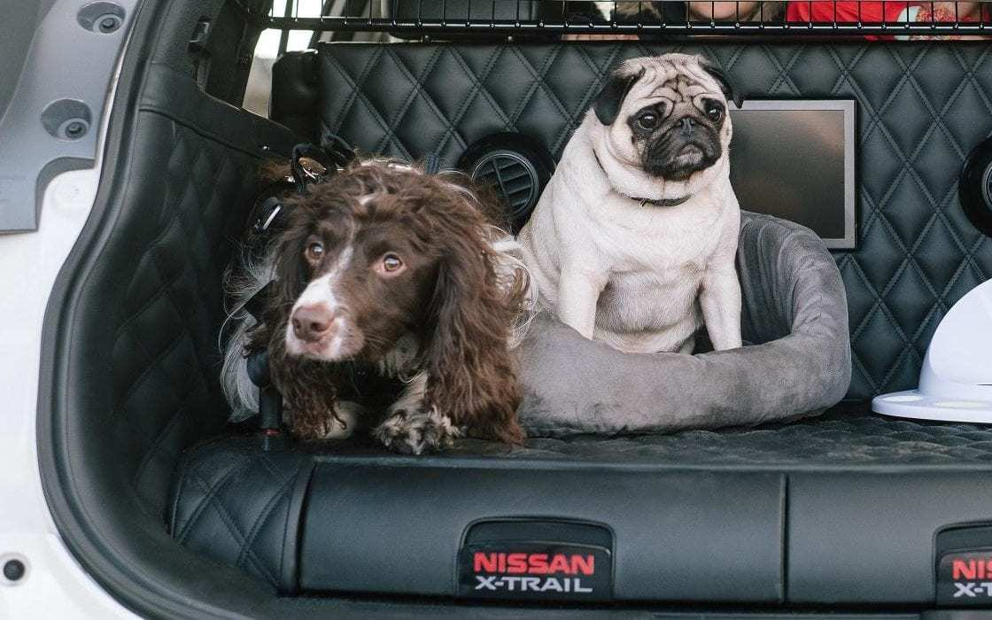 pets-riding-in-cars